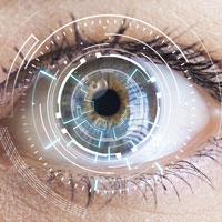 Retina - Netzhaut